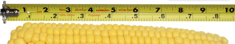 measuring ears of corn and countingkernels